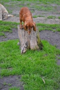 Banksia Park Puppies Salli - 22 of 22