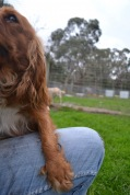 Banksia Park Puppies Salli - 5 of 22