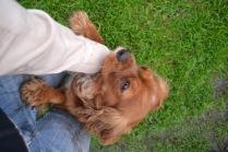 Banksia Park Puppies Salli - 9 of 22
