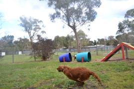 banksia-park-puppies-shayla-29-of-41