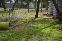 banksia-park-puppies-shayla-33-of-41