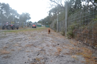 banksia-park-puppies-shiela-10-of-13