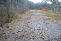 banksia-park-puppies-shiela-7-of-13