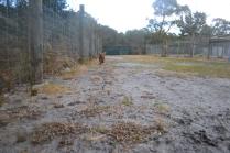 banksia-park-puppies-shiela-8-of-13