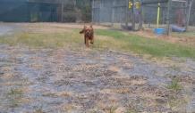 banksia-park-puppies-shona-1-of-21
