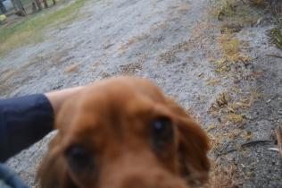 banksia-park-puppies-shona-10-of-21