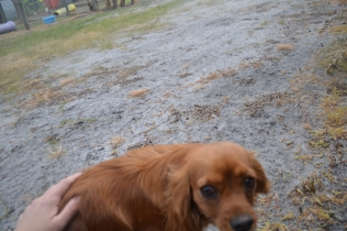 banksia-park-puppies-shona-11-of-21