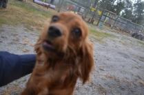 banksia-park-puppies-shona-12-of-21