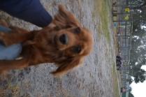 banksia-park-puppies-shona-13-of-21