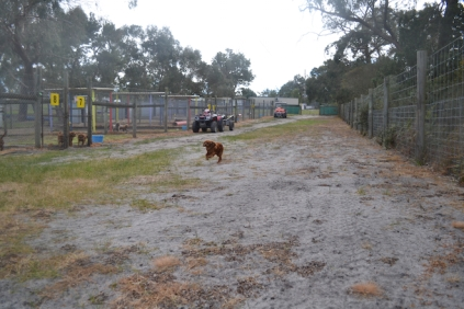 banksia-park-puppies-shona-14-of-21