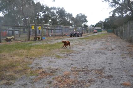 banksia-park-puppies-shona-15-of-21