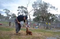 banksia-park-puppies-shona-17-of-21