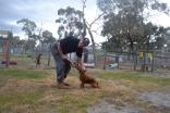 banksia-park-puppies-shona-18-of-21