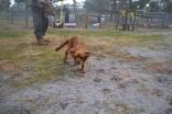 banksia-park-puppies-shona-19-of-21