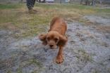 banksia-park-puppies-shona-20-of-21