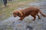 banksia-park-puppies-shona-21-of-21