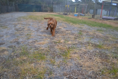 banksia-park-puppies-shona-3-of-21