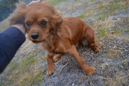 banksia-park-puppies-shona-4-of-21