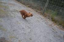 banksia-park-puppies-shona-5-of-21