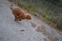banksia-park-puppies-shona-6-of-21