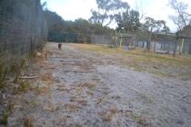 banksia-park-puppies-shona-7-of-21