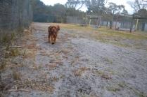 banksia-park-puppies-shona-8-of-21