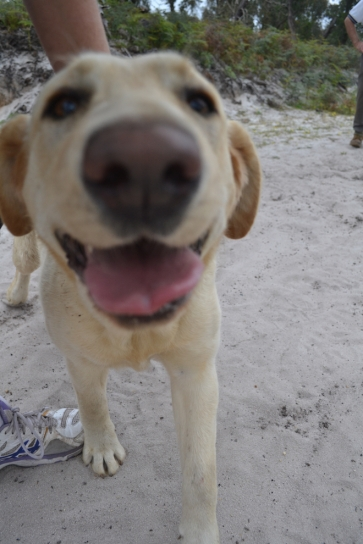 banksia-park-puppies-strawberri-13-of-14