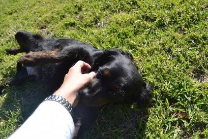 Banksia Park Puppies Stunner - 1 of 19