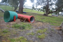 banksia-park-puppies-tanner-8-of-25