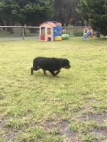 Banksia Park Puppies Sharon