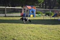Banksia Park Puppies Ludo