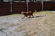 Sheila- Banksia Park Puppies - 2 of 32