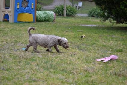 Banksia Park Puppies Fussle - 1 of 43