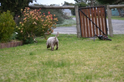 Banksia Park Puppies Fussle - 11 of 43