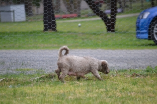 Banksia Park Puppies Fussle - 12 of 43