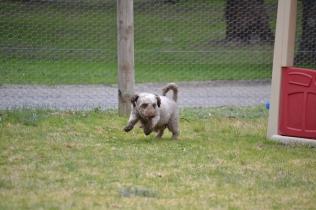 Banksia Park Puppies Fussle - 13 of 43
