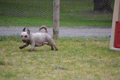 Banksia Park Puppies Fussle - 14 of 43