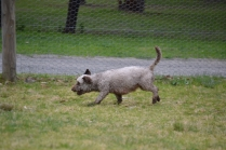 Banksia Park Puppies Fussle - 15 of 43