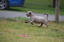 Banksia Park Puppies Fussle - 16 of 43