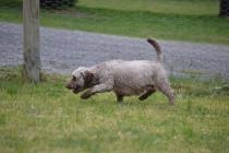 Banksia Park Puppies Fussle - 17 of 43