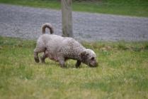 Banksia Park Puppies Fussle - 18 of 43