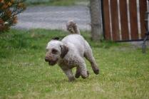 Banksia Park Puppies Fussle - 19 of 43