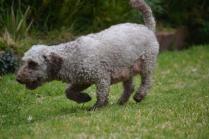 Banksia Park Puppies Fussle - 22 of 43