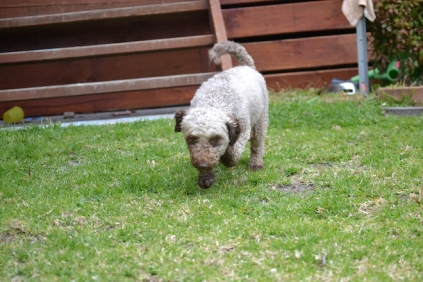 Banksia Park Puppies Fussle - 23 of 43