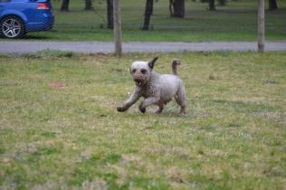 Banksia Park Puppies Fussle - 26 of 43