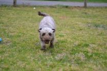 Banksia Park Puppies Fussle - 28 of 43