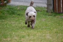 Banksia Park Puppies Fussle - 32 of 43