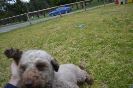 Banksia Park Puppies Fussle - 35 of 43