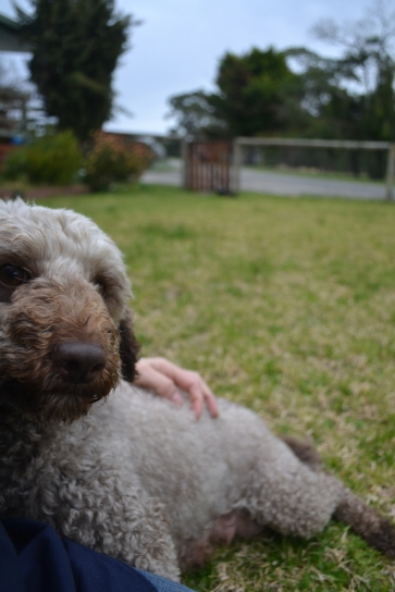 Banksia Park Puppies Fussle - 36 of 43