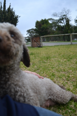Banksia Park Puppies Fussle - 37 of 43